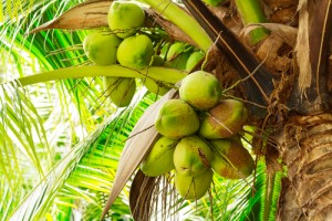 coconuts top the fertility super foods list