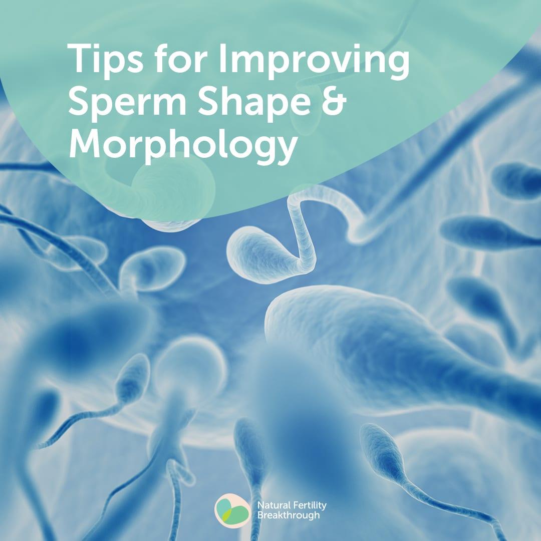 How To Improve Sperm Morphology Natural Fertility Faq S